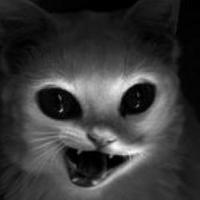 月光下的猫